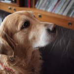 Pieni päivitysuutinen ja bonuksena koirakuva