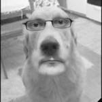 Koirien persoonallisuusanalyysi