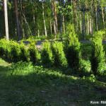 Puutarhanhoidosta